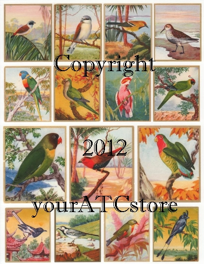yourATCstore Brilliant Bird Cards Collage Sheet #2