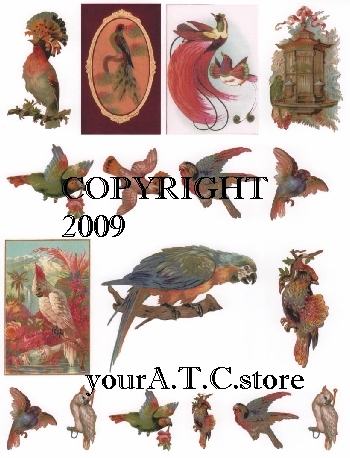 yourATCstore Exotic Tropical Birds Collage Sheet